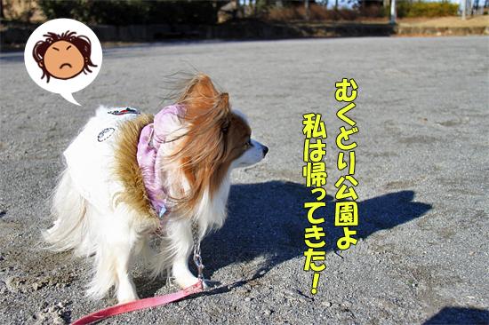 瑞穂の杜・凱旋 02