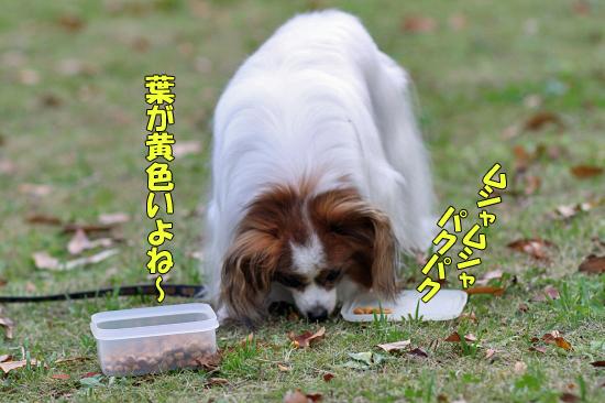 よせばイイのに香澄公園・・・ 07