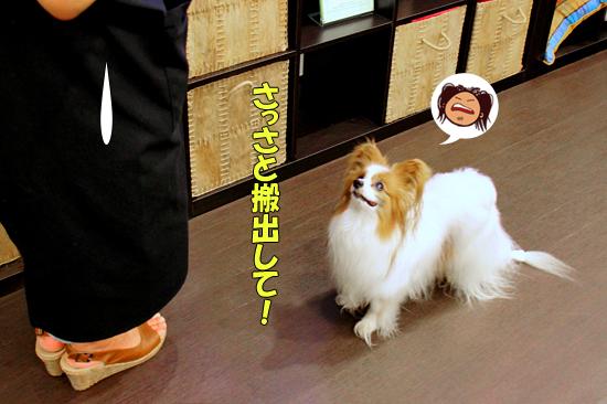サザちゃん★お祭りレポ(前篇)03