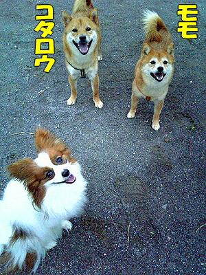 モモ&コタ親子★