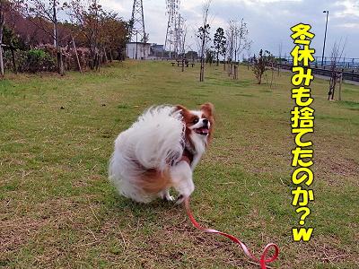 サザカレ2009★予約開始�