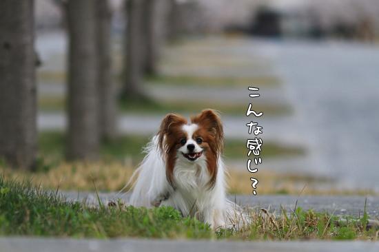 桜坂 18