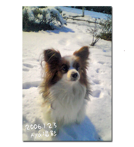 雪の魔法 20