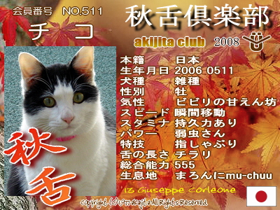 511-chiko-2008aki
