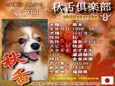 819-mauro-aki