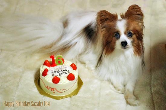 Happy Birthday sazaby 16th 01
