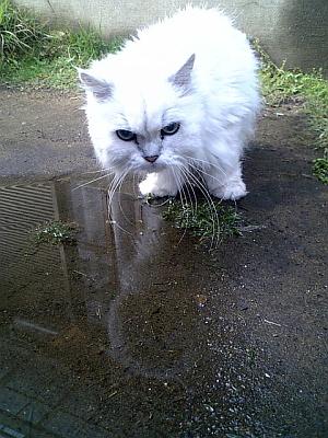 水に入っとる。。