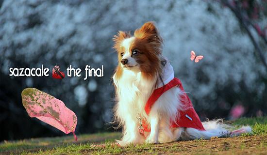 【サザカレ・The Final】 01