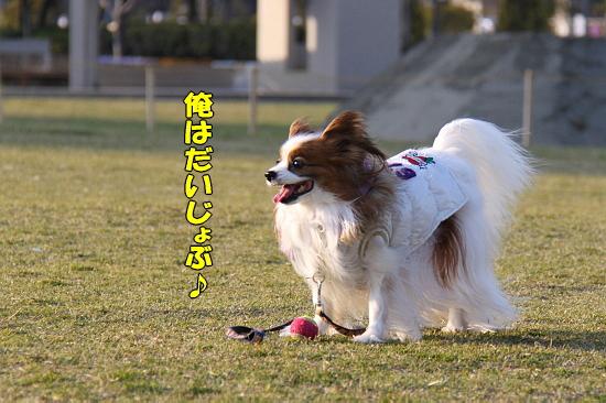 花粉症 02