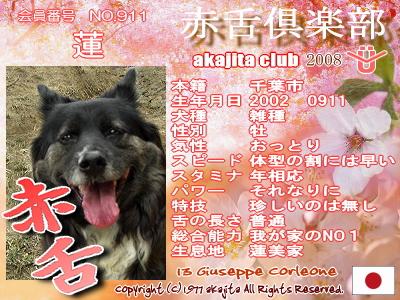 911-ren-2008sakura