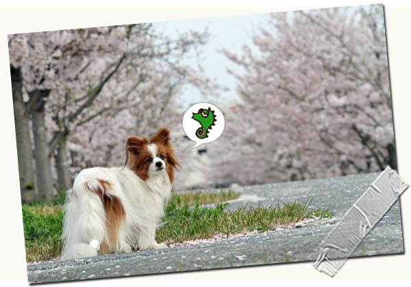 今年の桜は綺麗です★☆★  02