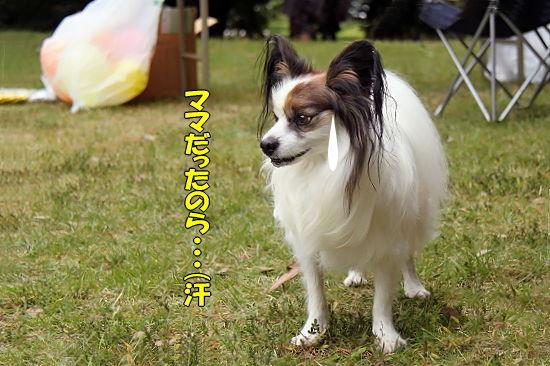 【サザオフ2010】 その2�