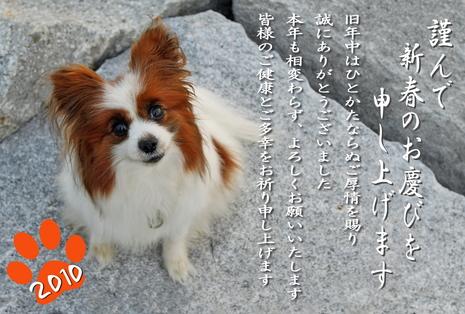 2010年賀状★☆★�