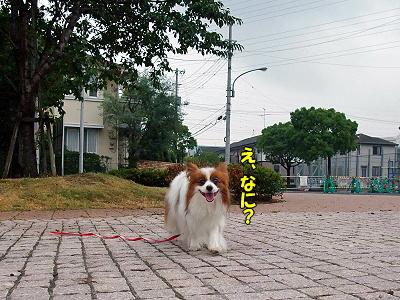 夏休み企画 No5�