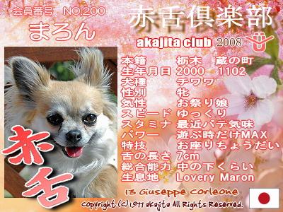 200-maron-2008sakura