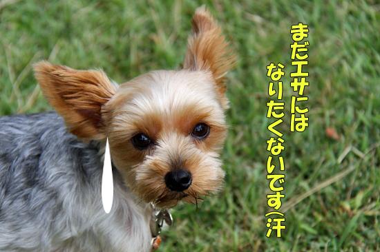 【サザオフ2011】 part5 17