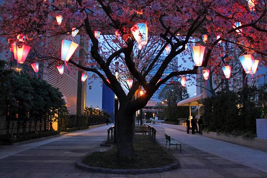 いつかの夜桜 04