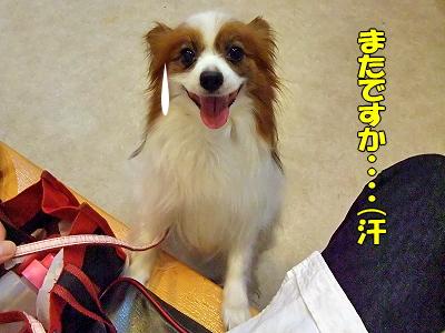 秋舌リベンジ★菊花賞�