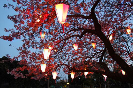 いつかの夜桜 09