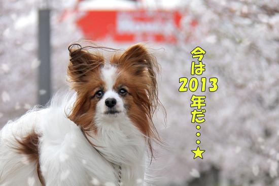 今年の桜は綺麗です★☆★  10