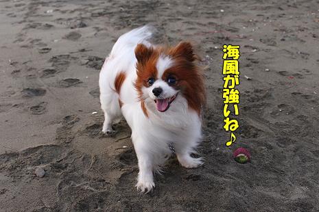【サザカレ2010】�
