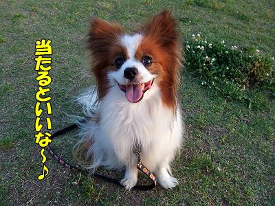 ポストカード★抽選番号ケテーイ�