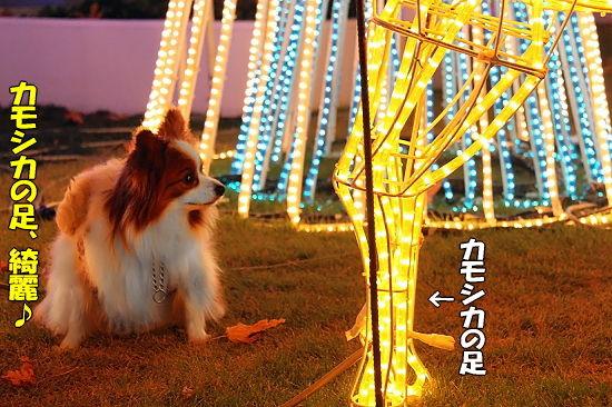 光の馬車★☆★(後篇) 05