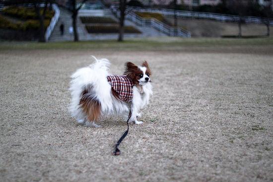 冬草 10