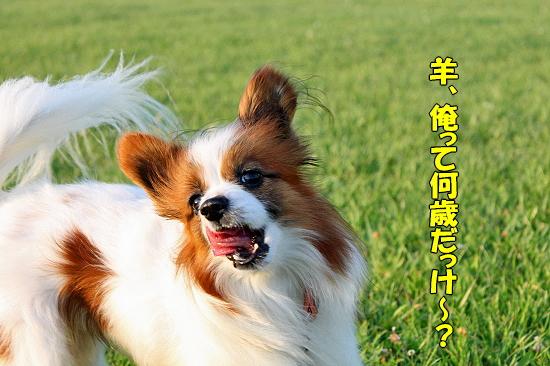 新しい仔犬★�