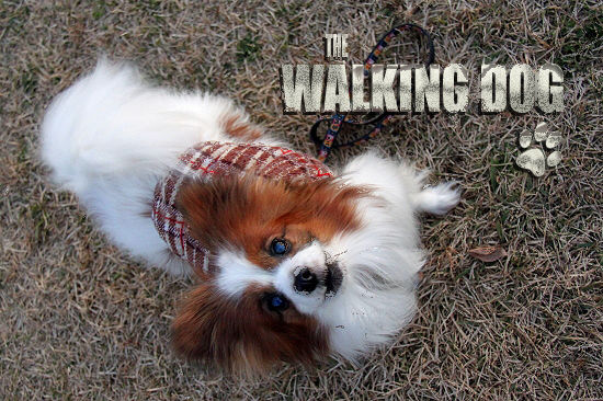 THE WALKING DOG 05