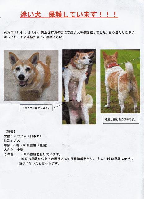 【迷い犬】のお知らせ�