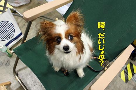 2010千葉インターナショナルドッグショー�