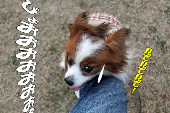 風の子 09