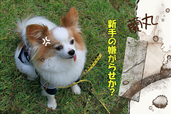 【サザオフ2011】 part5 05