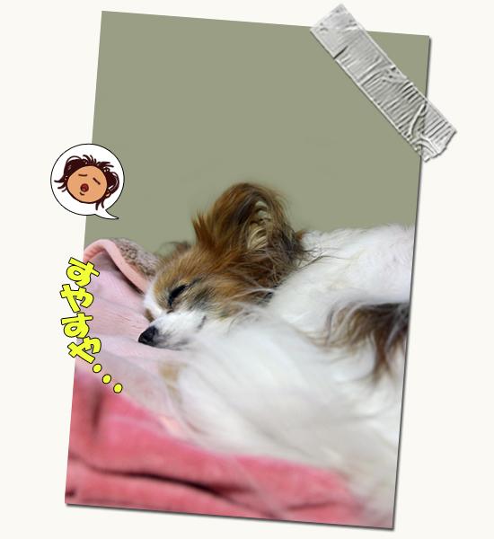 寝正月・・・ 01