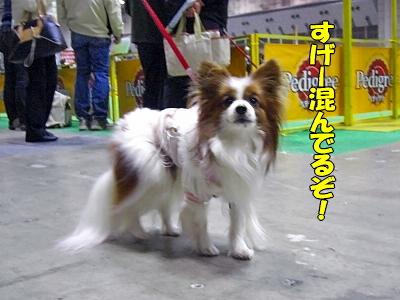 アジアインター2008(前篇)�