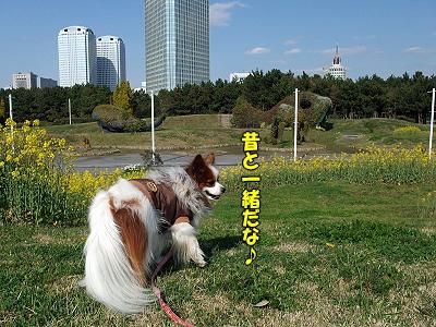 春一番(菜の花畑〜瑞穂編)�