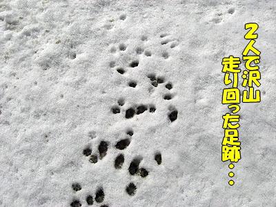雪原は何処へ?�