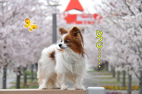 今年の桜は綺麗です★☆★  09