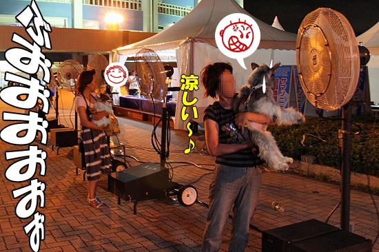 サマーソニック・2010♪(後編)�