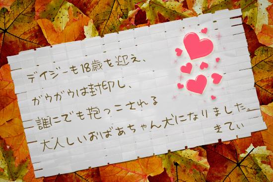【追悼】デイジーちゃん 06