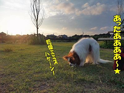 夏休み企画 No9�