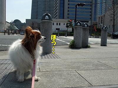 サザビー、横浜に立つ!の巻き�
