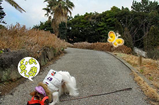 お散歩レビュー(後篇) 07