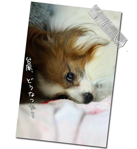 台風直撃・・・ 01