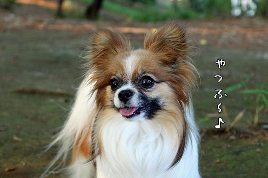 お見合い★☆★�