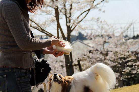 お花見オンライン(前篇) 15