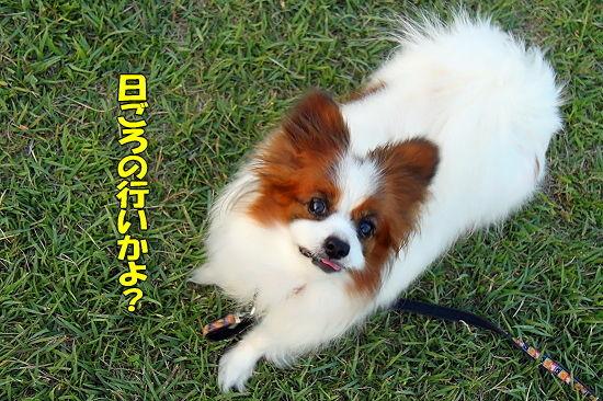 【サザオフ2010】延期のお知らせ�