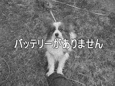 春一番(ハルちゃん圧勝編)22