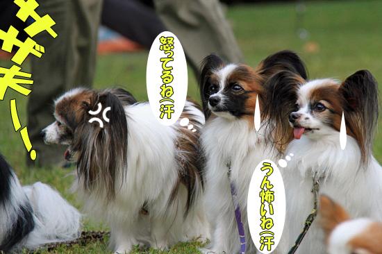 【サザオフ2011】 part6 06